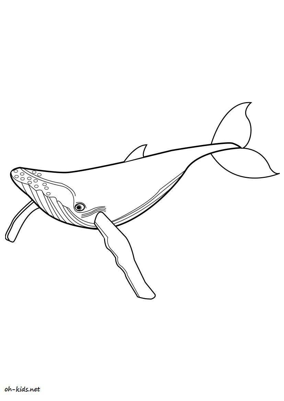 dessin gratuit baleine a colorier - Dessin #10