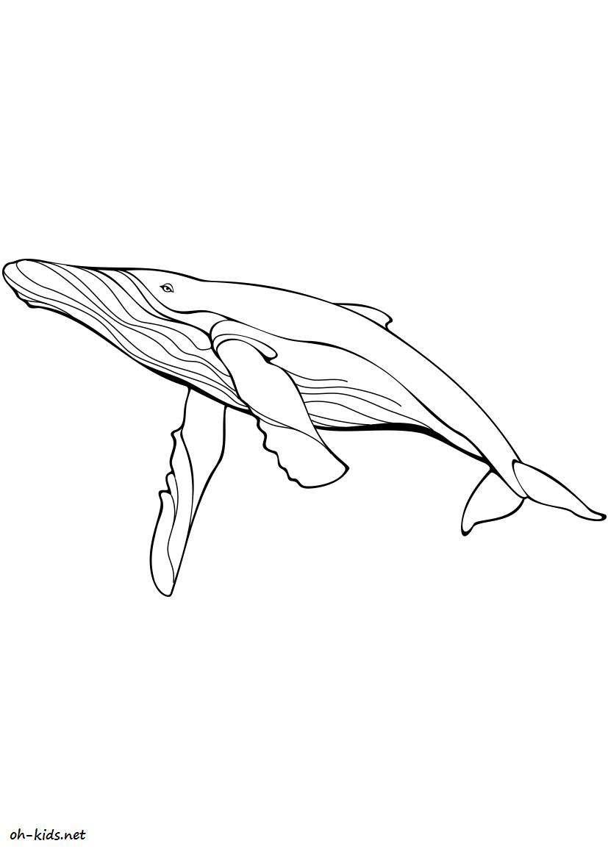 coloriage baleine - Dessin #15