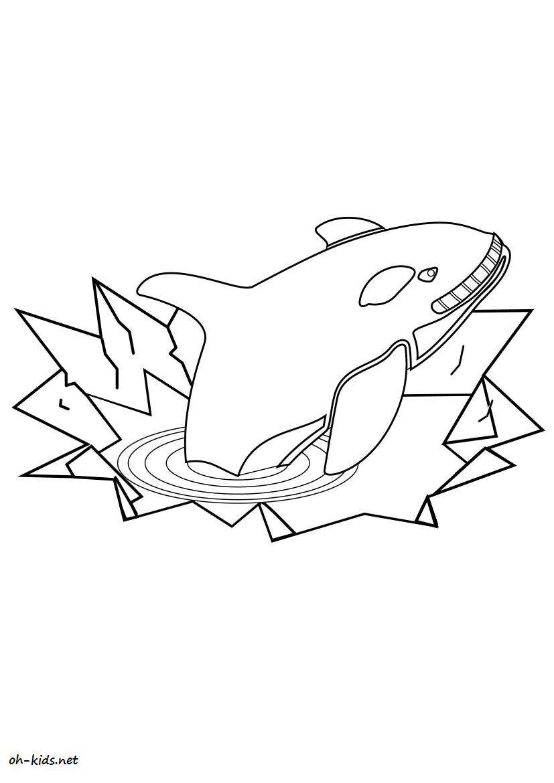 Coloriage baleine gratuit - Dessin #7