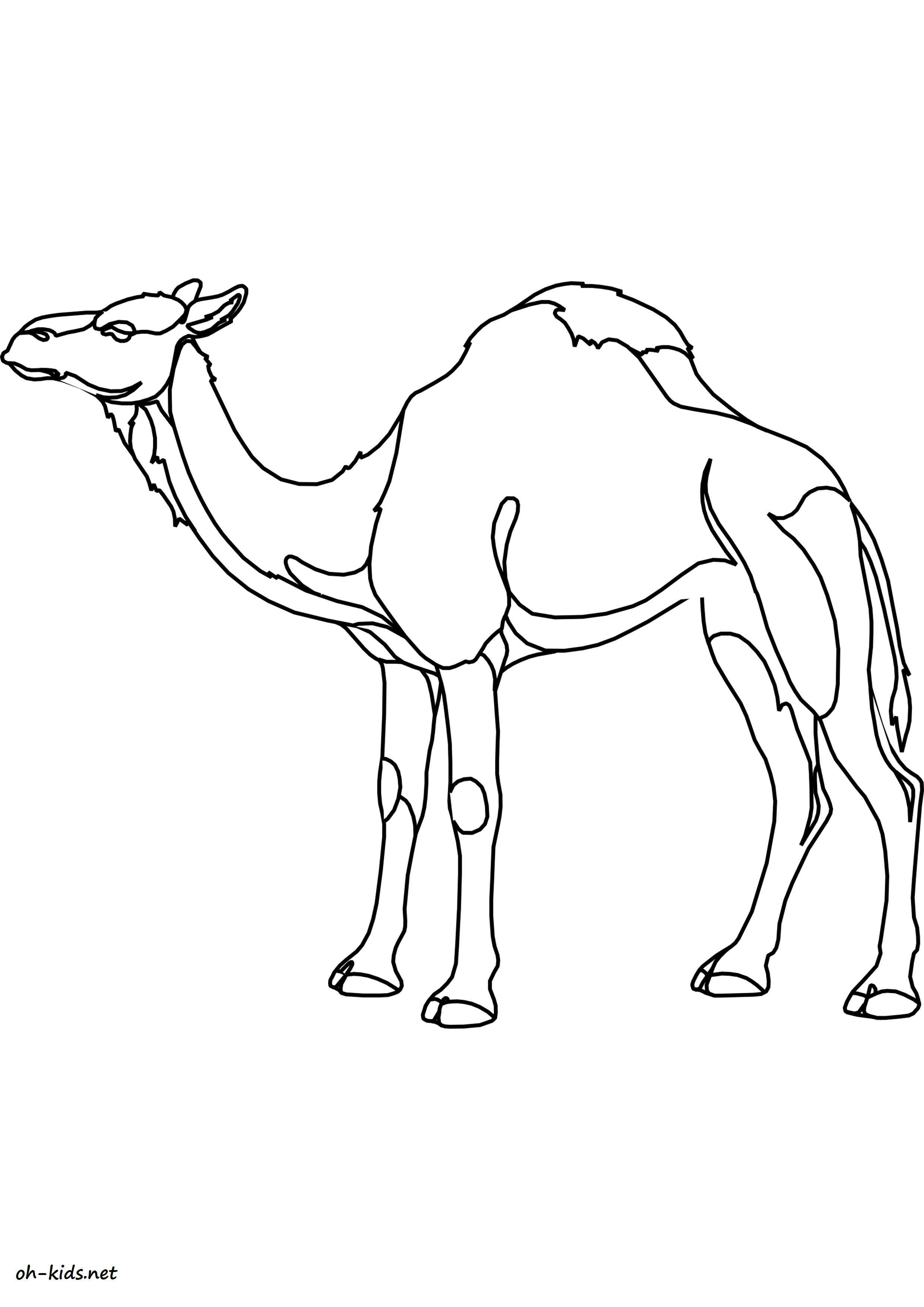 Coloriage chameau oh kids fr - Dessin de chameau ...