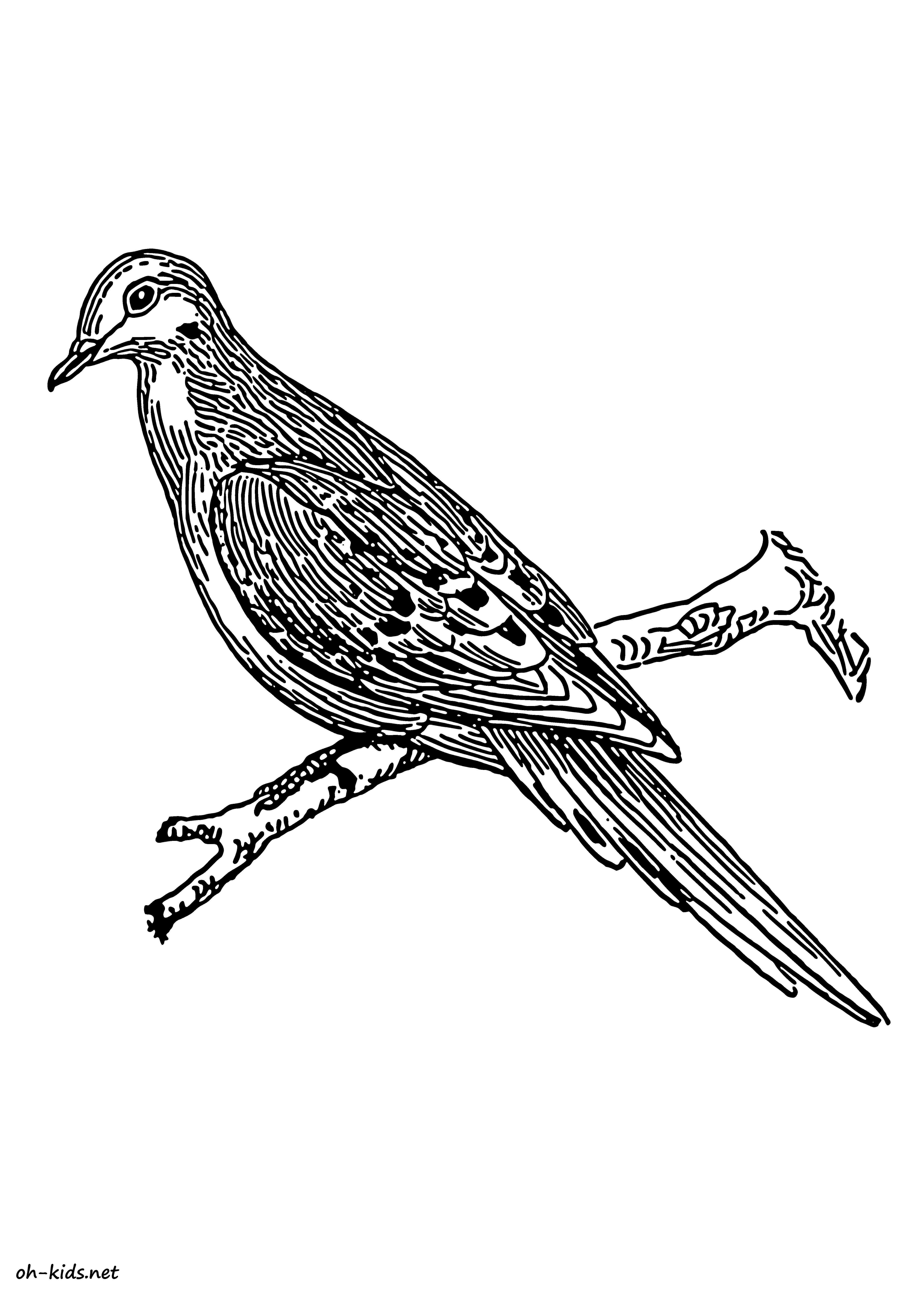 coloriage de colombe gratuit à imprimer et colorier - Dessin #373