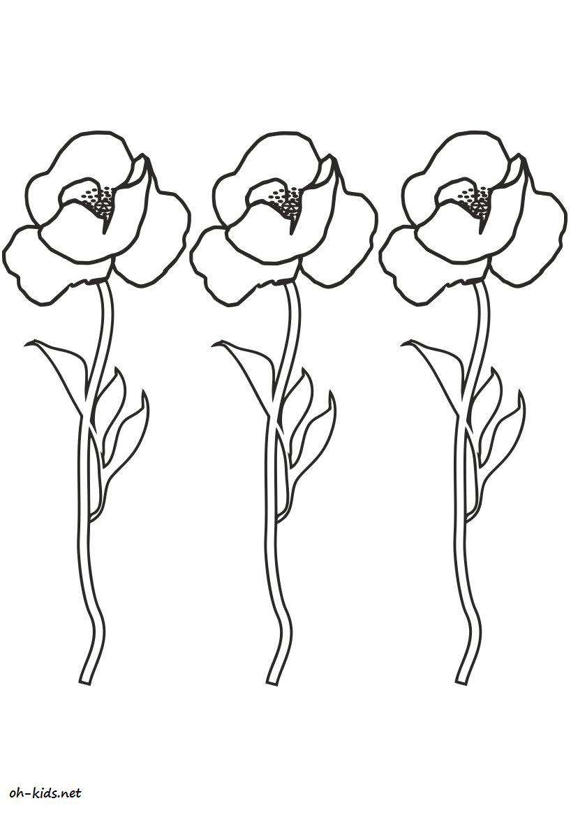 Coloriage coquelicot - oh Kids FR
