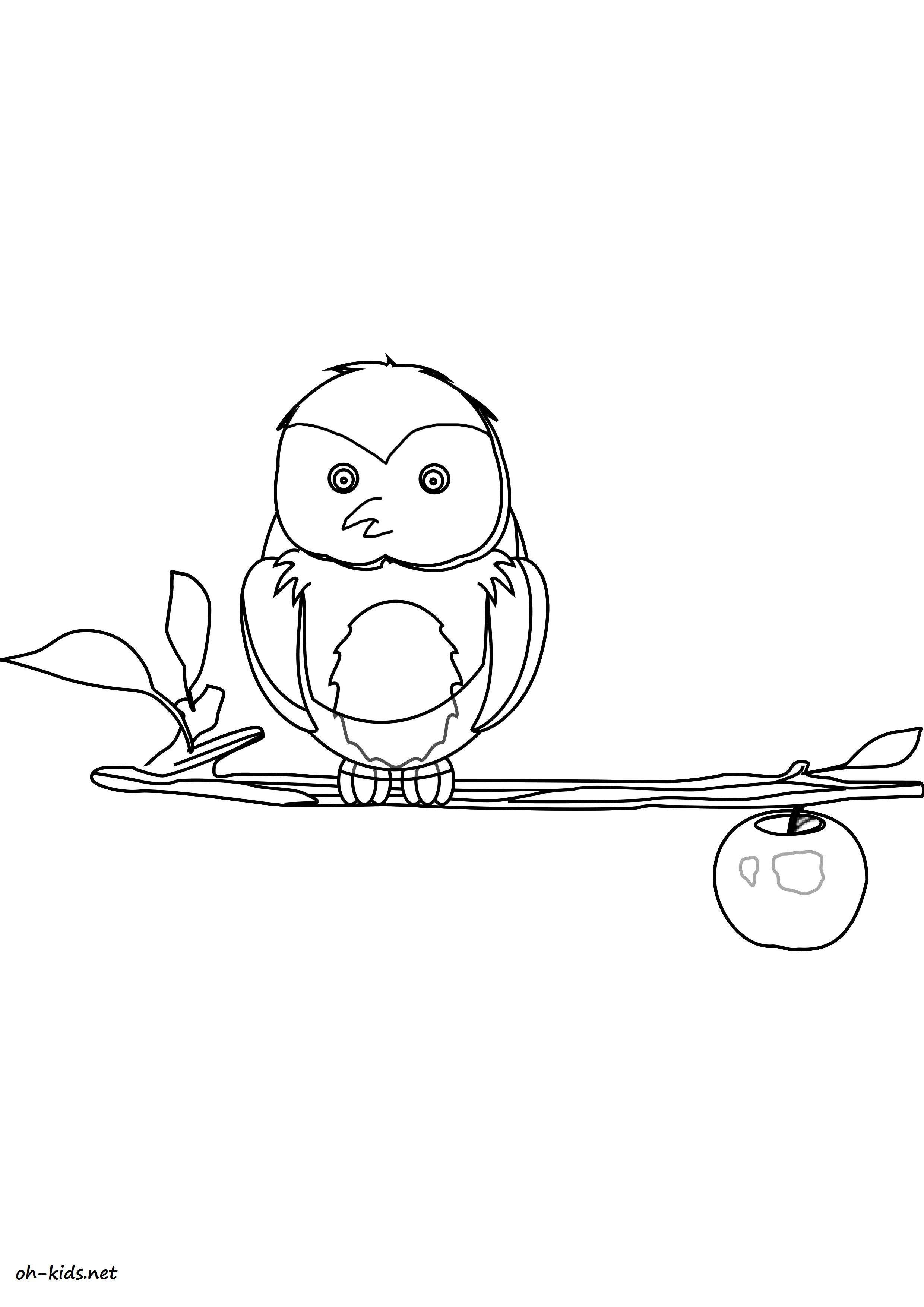 Jeux de coloriage hibou - Dessin #1618