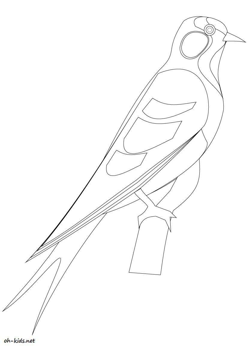Coloriage Hirondelle Oh Kids Fr