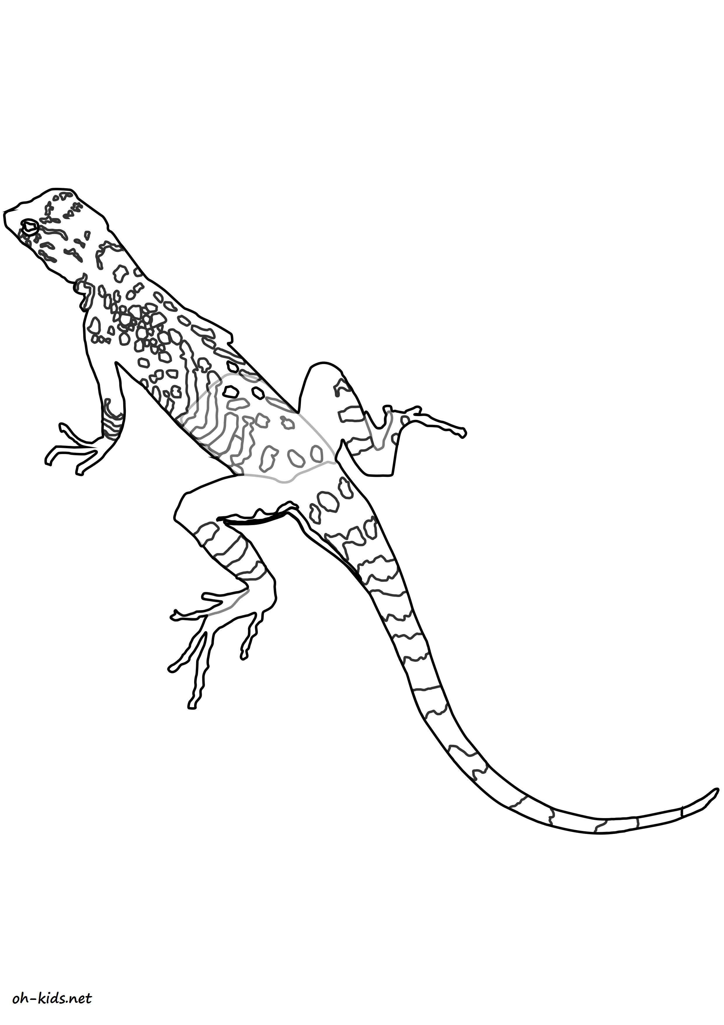 Beau dessin de iguane à colorier pour t'amuser - Dessin #1621