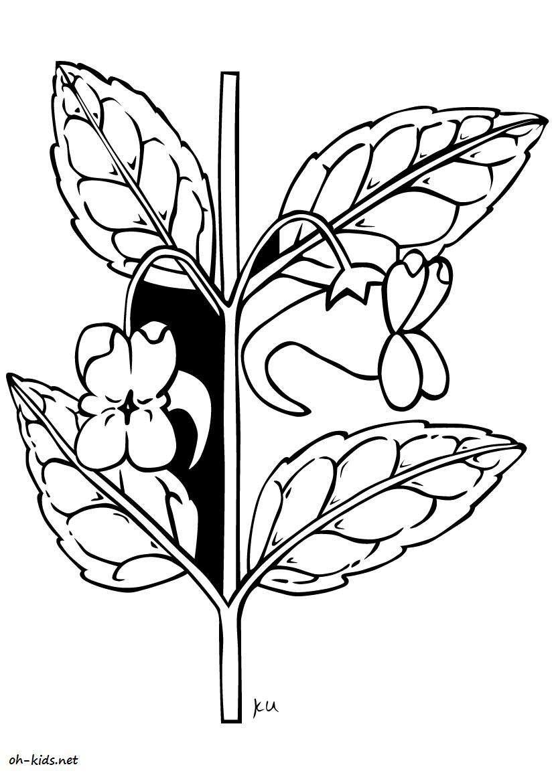 Coloriage jardin de fleurs page 2 of 3 oh kids fr for Image de jardin a imprimer