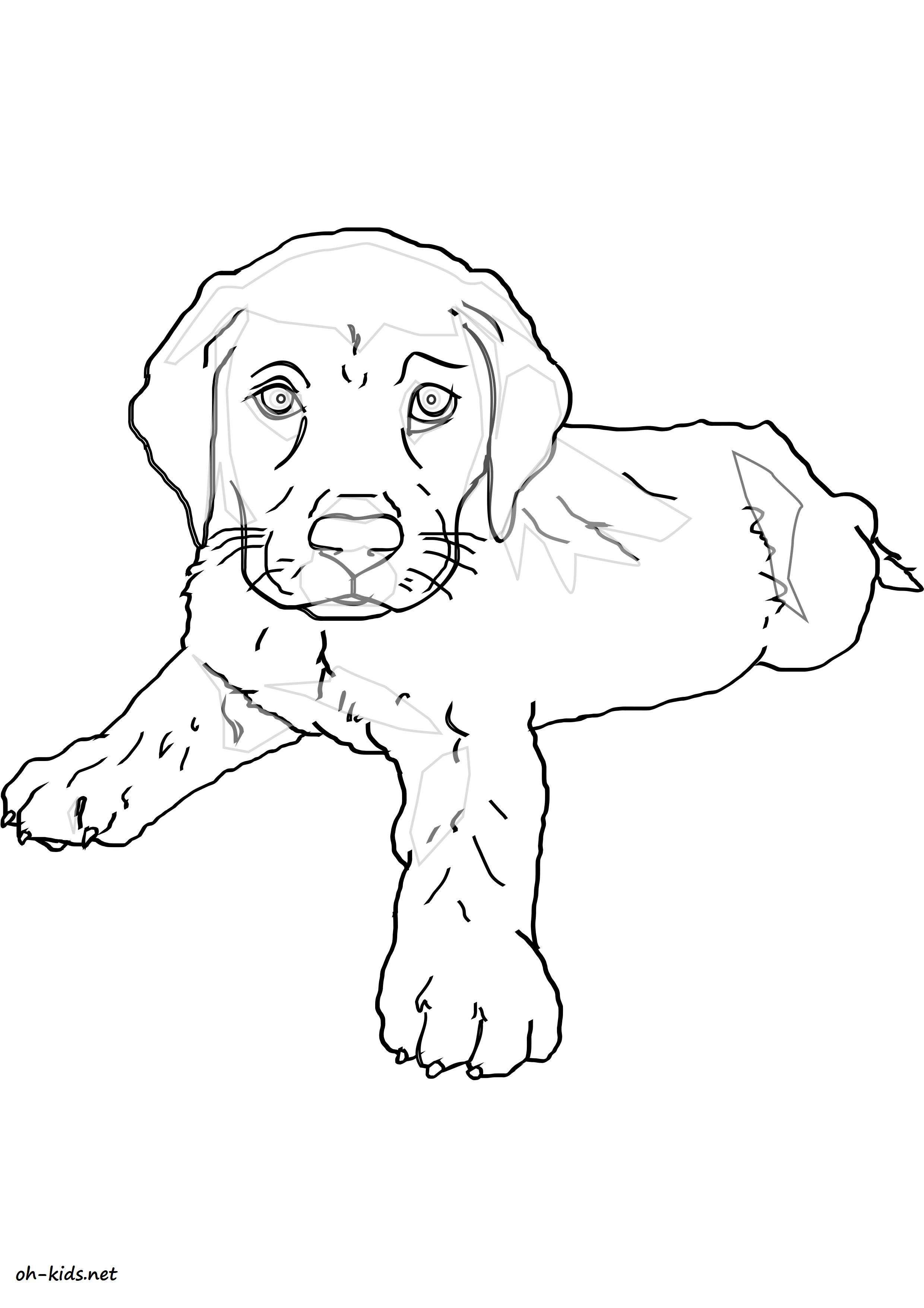 Coloriage labrador my blog - Coloriage labrador ...