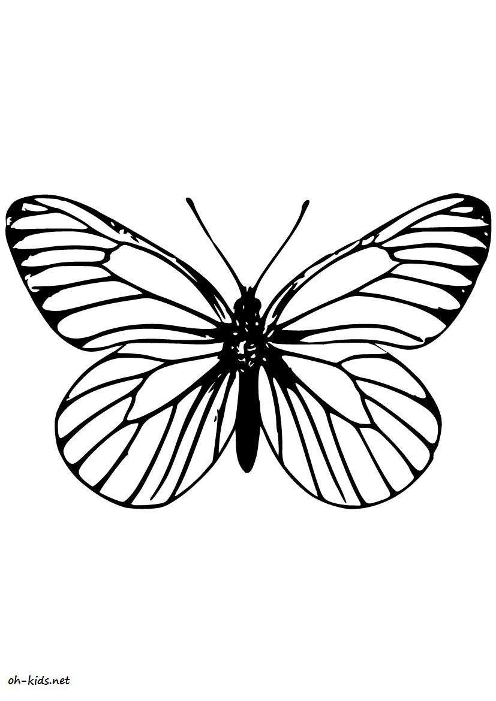 Dessin 477 coloriage magnifique papillon imprimer - Dessin de petit papillon ...