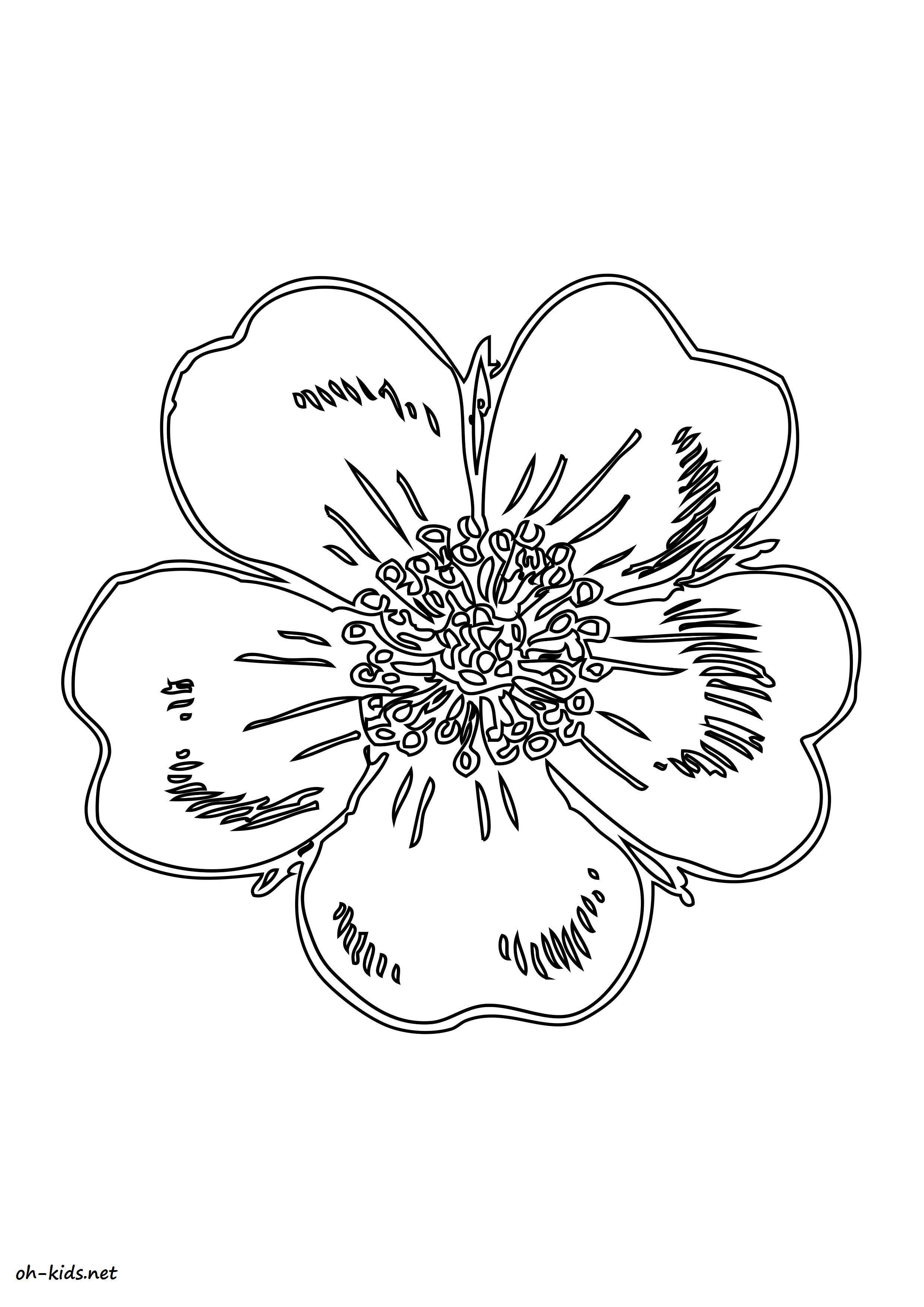 activité de coloriage roses a colorier - Dessin #1466