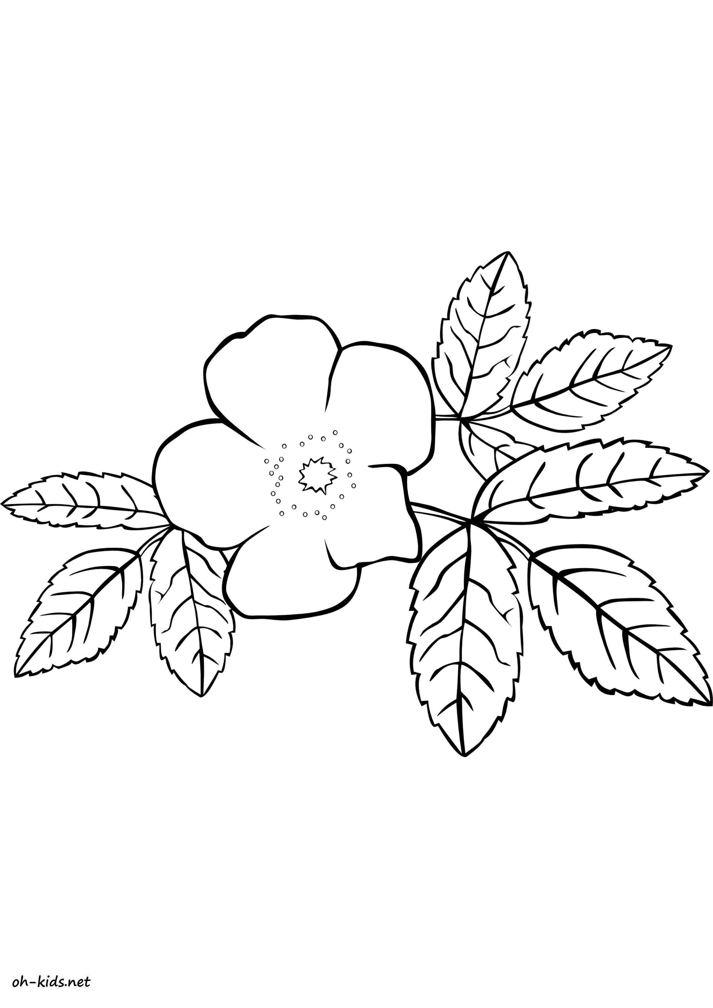activité coloriage roses gratuit - Dessin #1467