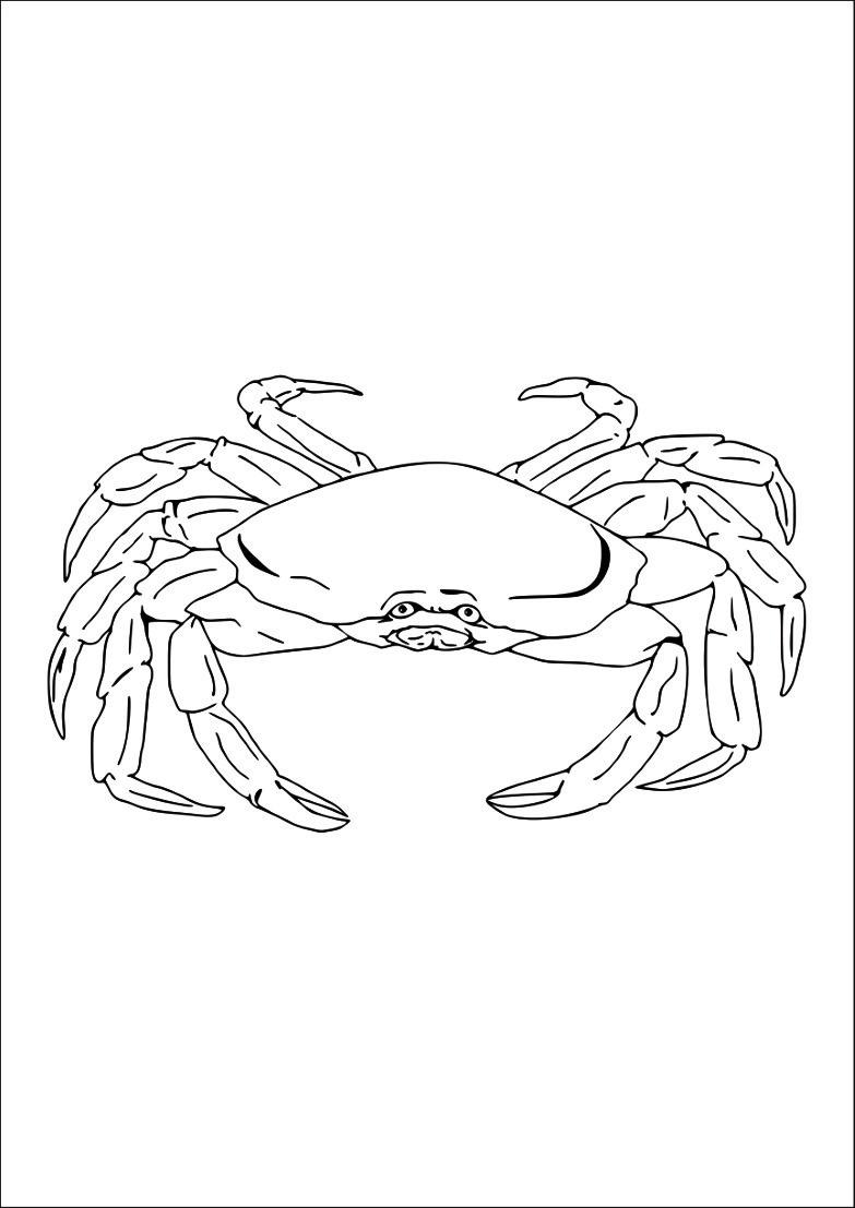 Dessin 1011 Coloriage Crabe A Imprimer Oh Kids Net